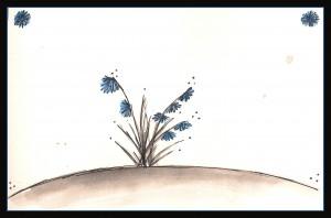 Scilla sibirica