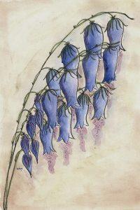 gezeichnete Waldglockenblume von Die Rote IRis (www.glaubsches.net)